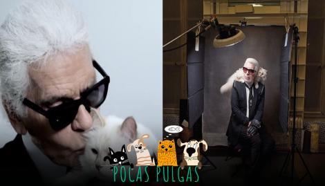 La célebre gata de Karl Lagerfeld: entre mayordomos, modelos y herencias millonarias