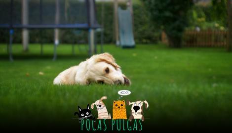 Esta es la verdadera razón por la cual perros y gatos comen pasto