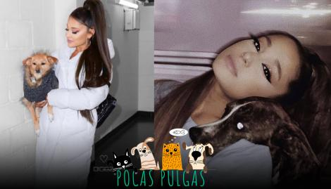 """Un cerdito y 12 perros: los """"amores"""" de Ariana Grande"""