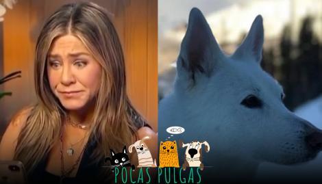 Jennifer Aniston recordó a su perra con un accesorio muy especial