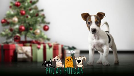 Recibieron por adelantado el regalo de Navidad y tuvieron una reacción que llenó de ternura las redes