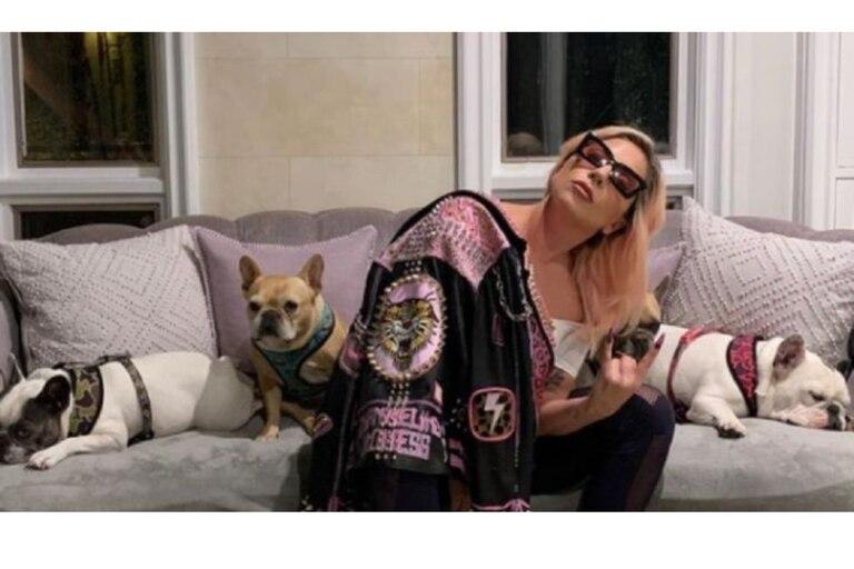 lady-gaga-y-un-pedido-desesperado-por-sus-perros