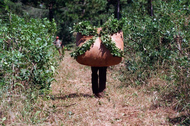 por-primera-vez-en-20-anos-habra-un-limite-para-las-nuevas-plantaciones-de-yerba