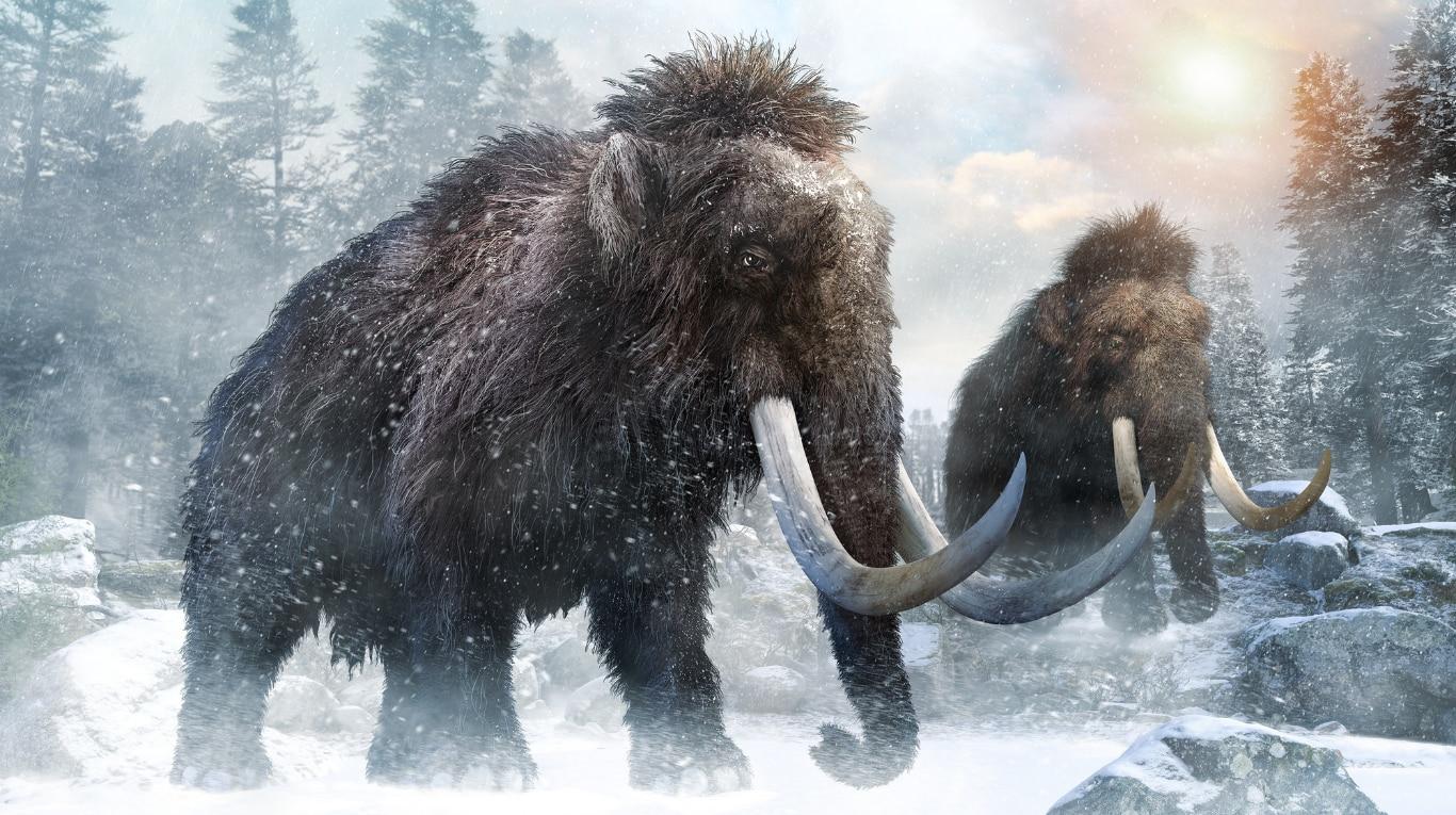 una-empresa-de-genetica-busca-recuperar-especies-en-extincion-y-empezara-por-el-famoso-'mamut-lanudo'